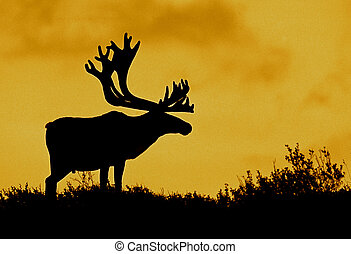 Caribou Silhouette - a silhouette of a barren ground caribou...