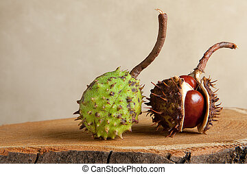 Chestnuts on tree trunk