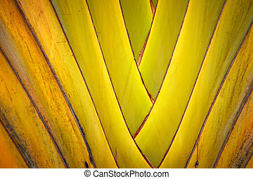 banana leaves branch - Pattern of ornamental banana leaves...