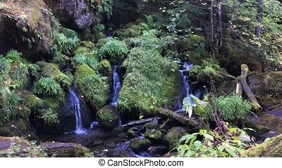 Oregon Cascades Watson Creek Oregon - Oregon Cascades Thick...