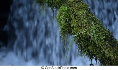 Moss Covered Tree against blue cascade Watson Creek Oregon