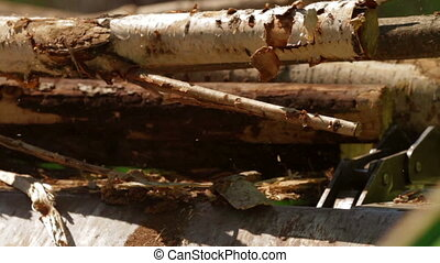 Lumber factory Conveyors of logs sorting machine -...