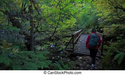 Hiking Girl on Toketee Falls Trail Oregon - Backpacker on a...