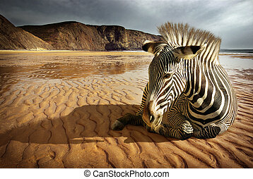 Beach Zebra - Surreal scene of a sitting zebra in an empty...