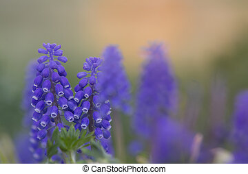 Macro blue flower with intentionally blurred background