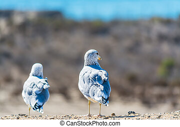seagulls standing on a wall - copule of seagulls standing on...