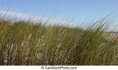 Grass in the dunes on the background of the sea. Portugal