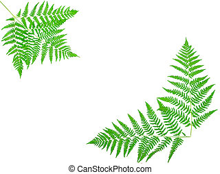 young green fern leaf against white background