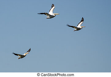 Three American White Pelicans Flying in a Cloudy Blue Sky