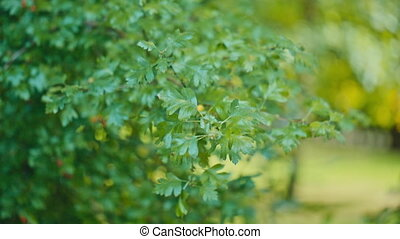 Green tree leaves in the wind