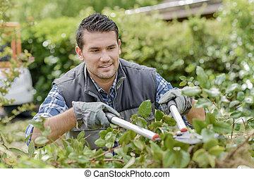 man trimming bushes