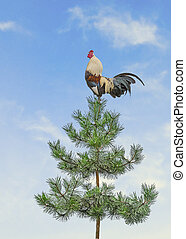 Pine tree - Rooster on pine tree