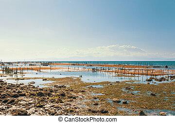 Dream beach, Algae at low tide and boy - Bali, Nusa Penida...