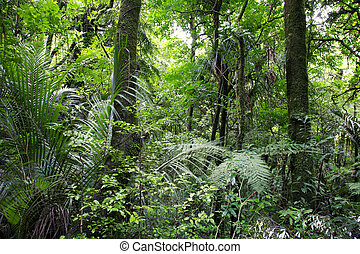 Tropical forest   - Lush green tropical forest wilderness