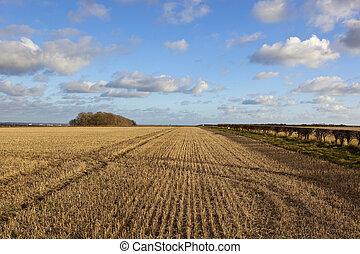 straw stubble landscape