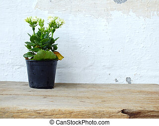 house plants on the wooden table with grung wallpaper...