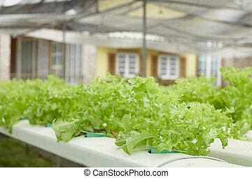 Hydroponics method of growing plants using mineral nutrient...