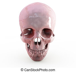 3d render of Human skull on white background with clipping path