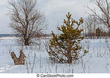 Trees on a snow-covered field