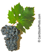 Red Cabernet Sauvignon grape with green leaf, isolated on...