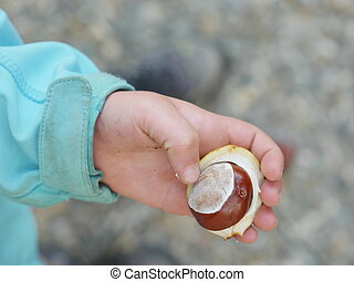 child conkers hand - little hands with chestnuts - fall time