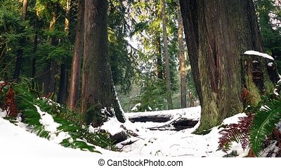 Forest Ferns And Trees In Thick Snow - Pretty forest scene...