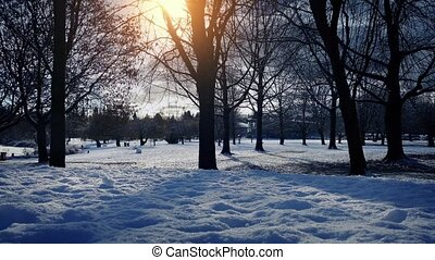 Park In Winter With Sun Glowing - Dolly shot moving slowly...