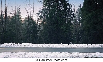 Cars Passing On Snowy Road Through Forest - Cars drive past...