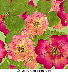 Briar, wild rose,. Seamless pattern texture of pressed dry...
