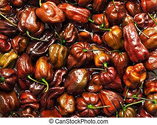 Chocolate Habanero - Lot of Habanero Chocolate peppers in...