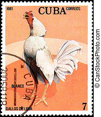 CUBA - CIRCA 1981: A stamp printed by Cuba shows the Cock...