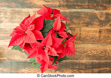 Beautiful red poinsettia on wooden background.