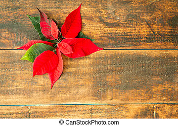 Beautiful leaves of poinsettia plant on wooden background.