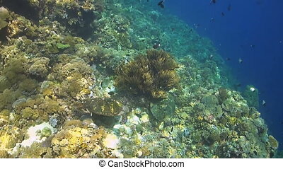 Two Hawksbill turtles on a coral reef