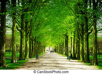 Clingendael park, Den Haag, Netherlands - Spring alley in...