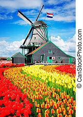młyny, wiatr, Holenderski
