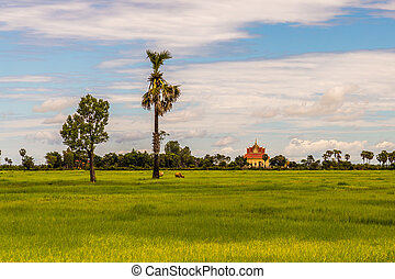 Rice field with trees and building
