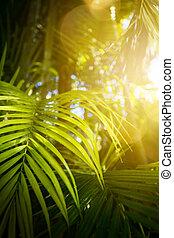 exoticas, tropicais, folhas, verde, fundo
