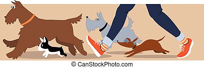 Dog walker banner - Horizontal banner with dogs and dog...