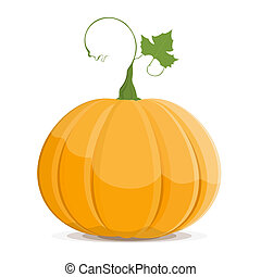 Pumpkin isolated on white background. EPS8