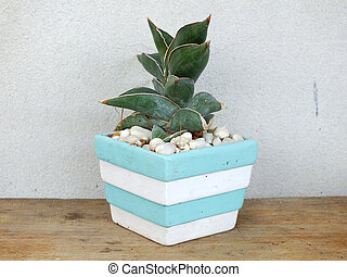 house plant collection in small flowerpots on wood background texture