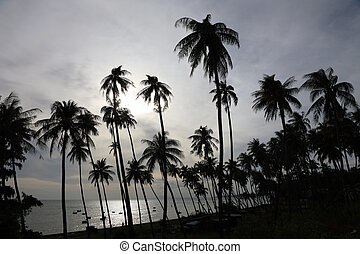 Silhouettes of palm trees on the beach - Dark silhouettes of...