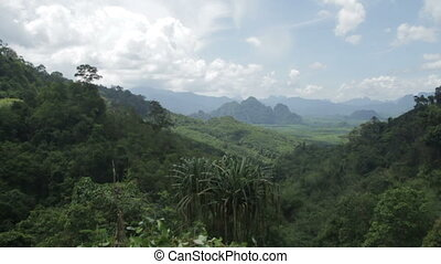 tropical forest in a sunny day - Panoram of tropical forest...