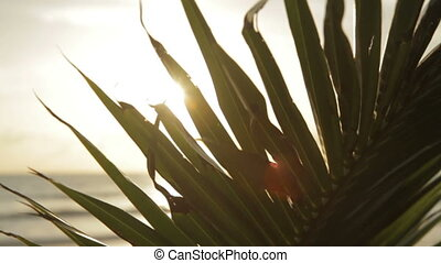 Close up of palm tree leaf on the sky and sea background