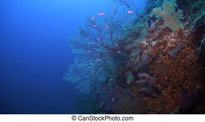 Colorful coral reef in Philippines with Snapper, Grouper,...