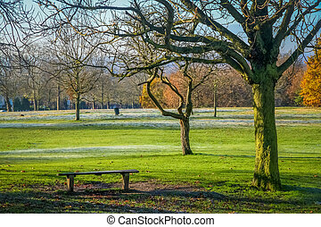 Empty bench in a park - Empty bench In a park in spring,...