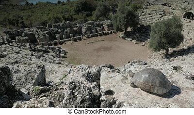 View from the top of roman amphitheater looking down towards stage with turtle, ancient city of Caunos, Turkey.