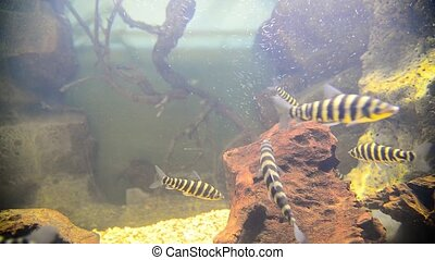 tropical fish in aquarium - tropical fish and corals in the...