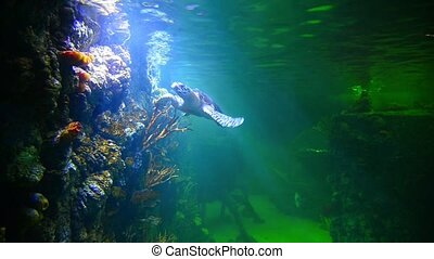turtle in deep-water aquarium - Stingray and turtle in the...