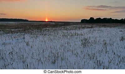 winter landscape with snow field of dry nature grass late in...